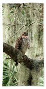 Hawk In Live Oak Hammock Hand Towel
