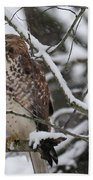 Hawk In Winter Bath Towel