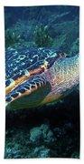 Hawksbill Sea Turtle 3 Bath Towel