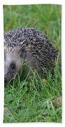 Hedgehog  Bath Towel