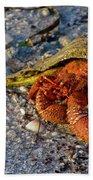 Hermit Crab- Florida Bath Towel