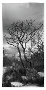 Hermit Island Tree 0912 Bath Towel