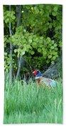 Hiding In The Grass. Pheasant Bath Towel