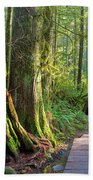 Hiking Trail Through Forest In Lynn Canyon Park Hand Towel