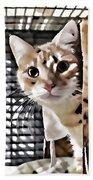 Homeless Cat Bath Towel