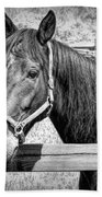 Horse Portrait In Black And White Bath Towel