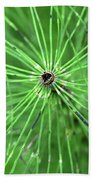 Horsetail Reed 1 Hand Towel