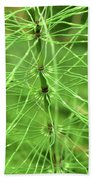 Horsetail Reed 2 Hand Towel