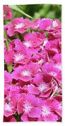 Hot Pink Sweet William Flowers In A Garden Blooming Bath Towel
