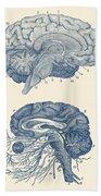 Human Brain - Central Nervous System - Vintage Anatomy Print Bath Towel