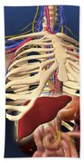 Human Skeleton Showing Digestive System Bath Towel