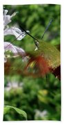 Hummingbird Clear-wing Moth At Monarda Bath Towel