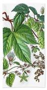 Humulus Lupulus, Common Hop Or Hop Bath Towel