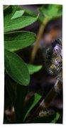 Hydrophyllum Capitatum Bath Towel