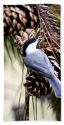 Img_0215-022 - Carolina Chickadee Bath Towel