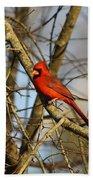 Img_2757-001 - Northern Cardinal Bath Towel