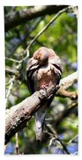 Img_7276 - Mourning  Dove Hand Towel