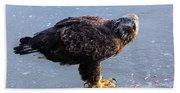Immature Eagle Having Lunch Bath Towel