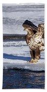 Immature Eagle On Ice Bath Towel