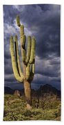 In Search Of That Perfect Saguaro  Bath Towel