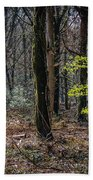 In The Woods Of Ireland's Coole Park Hand Towel by James Truett