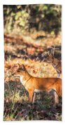 Indian Wild Dogs Dholes Kanha National Park India Bath Towel