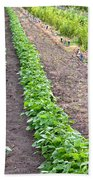 Intercropped Trees And Beans Bath Towel