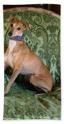 Italian Greyhound Portrait Bath Towel