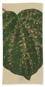 Ivy Leaf, Cissus Porphyrophyllus  Bath Towel