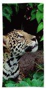 Jaguar Panthera Onca Peeking Bath Towel