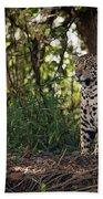 Jaguar Sitting In Trees In Dappled Sunlight Bath Towel