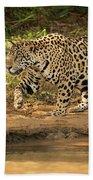 Jaguar Walking Beside River In Dappled Sunlight Bath Towel