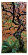 Japanese Garden Lace Leaf Maple Tree In Fall Hand Towel