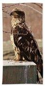 Juvenile Eagle Bath Towel