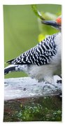 Juvenile Red-bellied Woodpecker In The Rain Bath Towel by Ricky L Jones