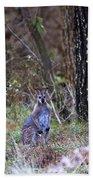 Kangaroo In The Forest Bath Towel