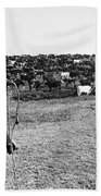 Kansas: Cattle, C1900 Bath Towel