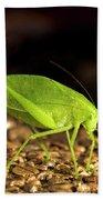 Katydid Close Up Bug Bath Towel