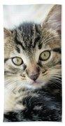 Kitten Looking Bath Towel