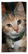 Kitten Bath Towel