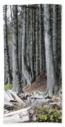 La Push Beach Trees Bath Towel