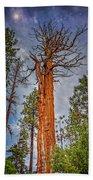 Lake Tahoe Trees On 89  Bath Towel