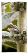 Lamb's Ear Bath Towel