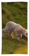 Lambs On The Meadow Bath Towel