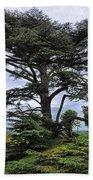 Large Trees At Chateau De Chaumont Bath Towel