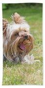 Laughing Yorkshire Terrier Bath Towel