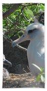 Laysan Albatross Chick Bath Towel