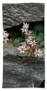 Life On Bare Rock - Pale Pink Succulents On The Wall Bath Towel