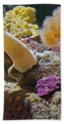 Life Under The Sea In Monterey Aquarium-california Bath Towel