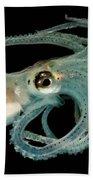 Lilliput Longarm Octopus Bath Towel